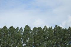 Linea e cielo di albero fotografia stock