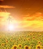 Linea elettrica ad alta tensione alberi nel campo dei girasoli, cielo di tramonto Immagini Stock