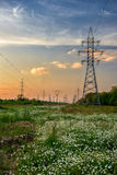 Linea elettrica ad alta tensione nel prato del fiore Immagine Stock
