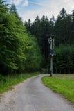 Linea elettrica nella foresta Immagine Stock