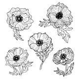 Linea insieme dei fiori dell'anemone del disegno di arte Fotografia Stock Libera da Diritti