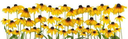 Linea isolata coneflower giallo Immagine Stock