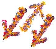 Linea isolata frecce multicolori, raccolta del applicat degli elementi Fotografie Stock