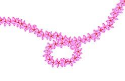 Linea modello di fiore di plumeria Fotografia Stock Libera da Diritti