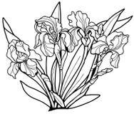 Linea nera delle iridi dei fiori su un fondo bianco Coloritura per gli adulti immagine stock libera da diritti