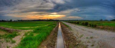 Linea principale tramonto a Paddy Field nel formato di paesaggio. Immagine Stock Libera da Diritti