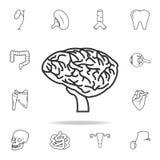 Linea sottile icona del cervello Insieme dettagliato delle icone umane della parte del corpo Progettazione grafica di qualità pre royalty illustrazione gratis