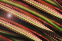 Linea variopinta astratta in natura Fotografie Stock Libere da Diritti
