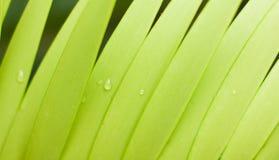 Linea verde delle foglie Immagine Stock