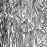 Linear black wood texture on white background vector image royalty free illustration