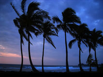 Linear Coco. A stunning blue sunset highlights the silhouette of coconut palms, swaying in the tropical breeze along the shores of Haleiwa, Hawaii (North Shore royalty free stock photos
