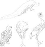 Linear drawing birds Stock Photos