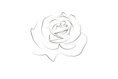 Linear drawing of a rose Stock Image