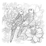 Linear drawing of two parrots and exotic flowers Royalty Free Stock Image