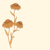 Linear flower drawing detailed Stock Photography