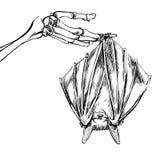 Linear illustration of a bat Stock Photos