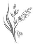 Linear   illustration of oat (Avena sativa). Hand drawing, illustration of oat (Avena sativa Stock Photos