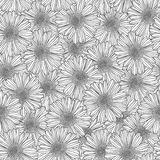 Linear seamless pattern - chamomile flowers Royalty Free Stock Images