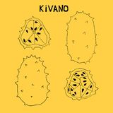 Linear set of kivano, african prickly cucumber,horned melon. Rare fruit originally from Africa. stock illustration