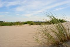 Linear shape dunes and detail of grass, sandy beach Hoek van Holland Royalty Free Stock Images