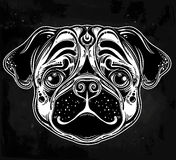 Linear style Illustration of a pug dog face. Stock Images