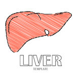 Linear stylized drawing of liver Stock Image