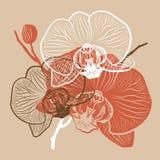 Lineare Blumenzusammenfassung der Orchidee Stockfoto