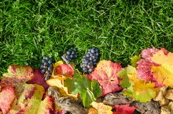 Lineare Herbstzusammensetzung auf grünem Hintergrund des wirklichen Grases Stockfoto