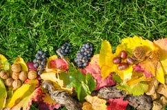 Lineare Herbstzusammensetzung auf grünem Hintergrund des wirklichen Grases Stockfotografie