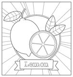 Lineart fruit illustration Royalty Free Stock Photo