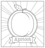 Lineart fruit illustration Royalty Free Stock Photography