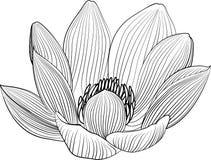 Lineart lotosowego kwiatu kreskowa ilustracja Wektorowy abstrakcjonistyczny czarny i biały kwiecisty tło Obraz Stock