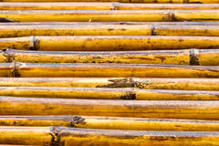 Lined bamboo Royalty Free Stock Image