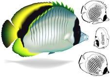 Lined Butterflyfish Set stock illustration