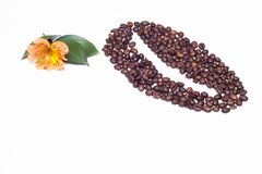 Lined coffee beans from small coffee beans and an orange hibiscus flower on a white background, copy space, natural stock image