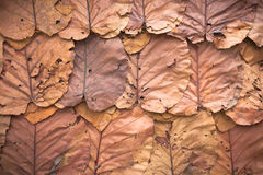 Lined dry leaves wall color background texture Royalty Free Stock Photography