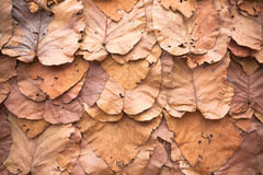 Lined dry leaves wall color background texture Royalty Free Stock Image