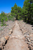 Lined with stones hiking trail passing in coniferous forest among pieces of lava. The road to the lunar landscape. Tenerife, Canar Royalty Free Stock Photography