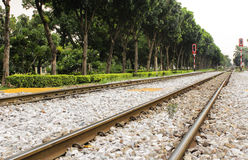 Lined tracks and lined trees Royalty Free Stock Photo