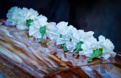Lined Up Carnations. White Carnations sit on a cedar coffin with the sadness in the air but also happiness for the the reunion that we cannot see but know it's Royalty Free Stock Image