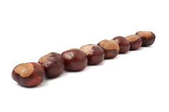 Lined up chestnuts Royalty Free Stock Image