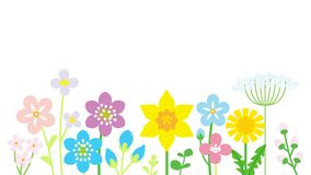 Lined up Colorful Wildflowers White background Royalty Free Stock Images