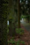 Lined up trees with moss in park Royalty Free Stock Photo