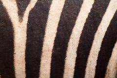 Linee astratte modello della zebra fotografia stock