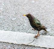 Linee dell'incrocio dell'uccello Fotografie Stock Libere da Diritti