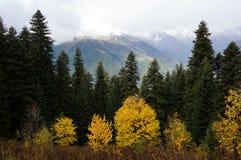 Linee della montagna e dell'albero immagini stock