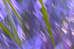 Linee della sfuocatura dell'erba con le porpore ed i rose Fotografia Stock Libera da Diritti