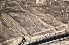 Linee di Nazca - fugure dell'albero Immagini Stock Libere da Diritti