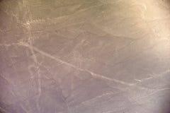 Linee di Nazca - il cane Fotografia Stock