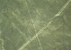Linee di Nazca: Il cane Immagini Stock
